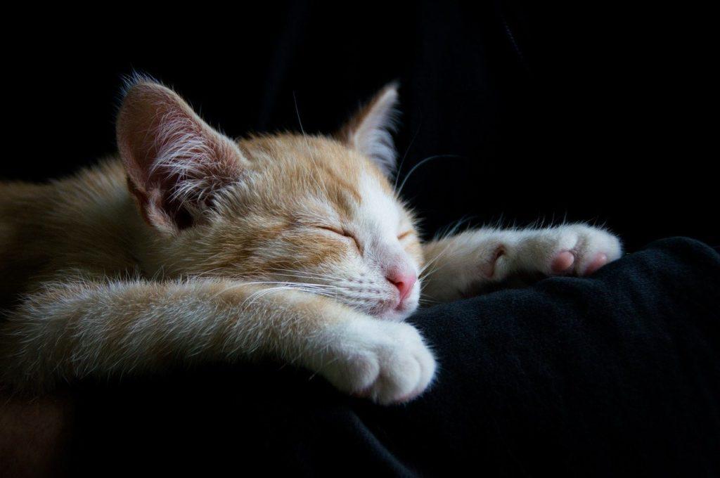 cat, cozy, sleep